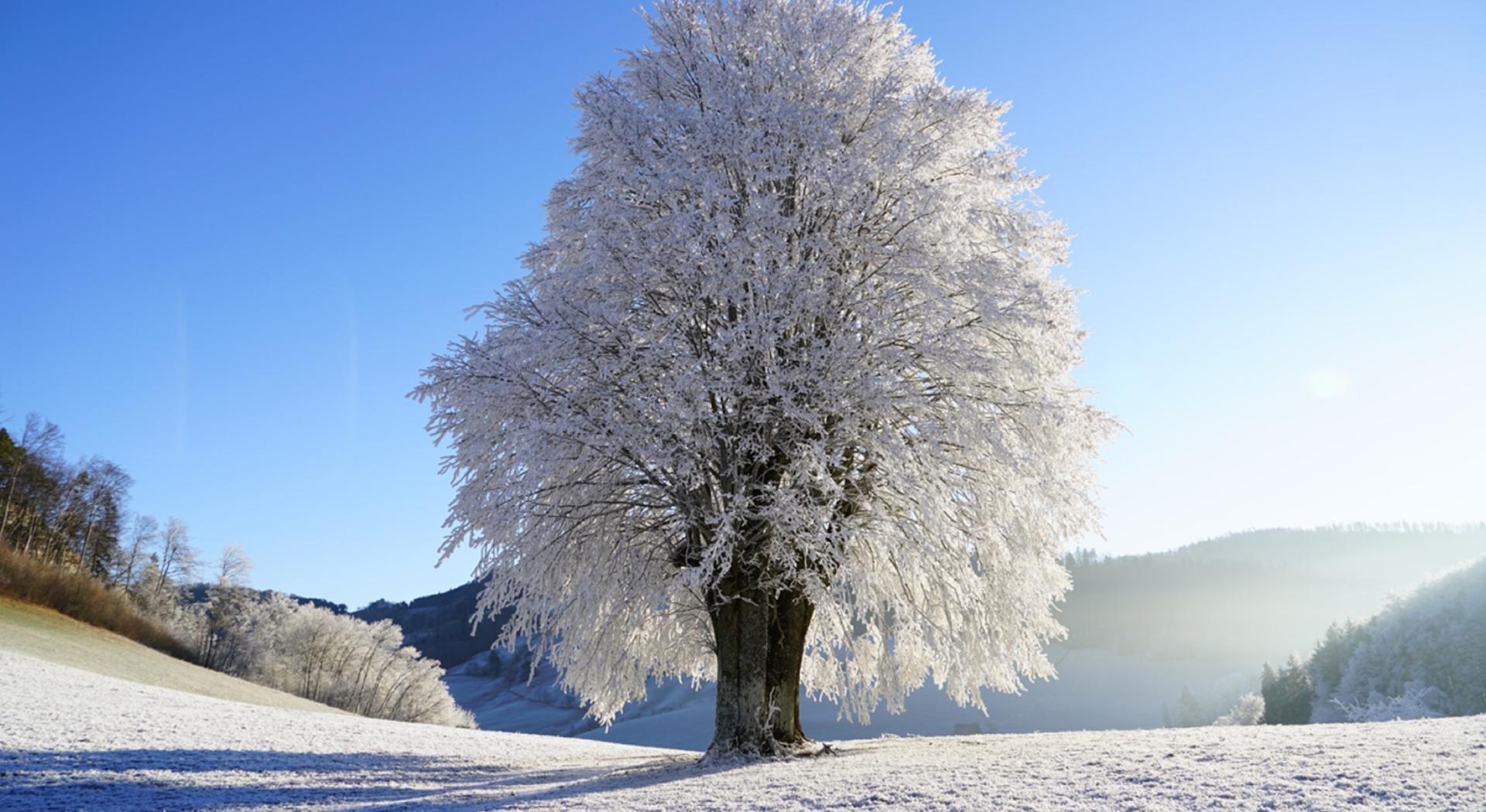 neve_albero