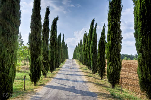 strada-di-campagna-con-filari-di-cipressi