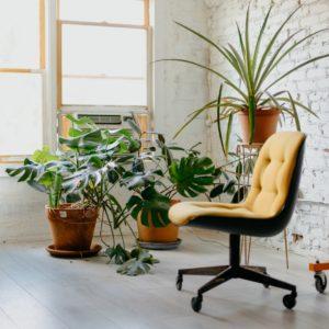 piante ufficio feng shui